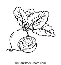 Freehand drawing illustration Beetroot.