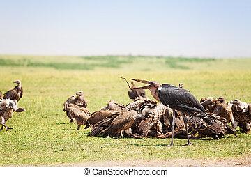 Herde, Fütterung, Geier,  marabou, afrikanisch