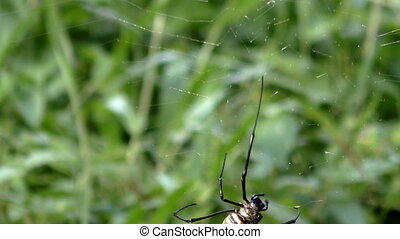 close up spider on web in tropical forest.