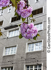 blooming tree and tenement - a flowering tree against the...