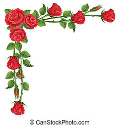 Roses - White background with red roses
