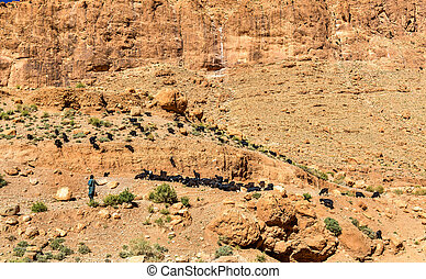 Herd of goats at Todra Gorges, Morocco