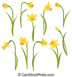 Narcissus Set With Gradient Mesh, Vector Illustration
