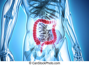 3D illustration of Large Intestine. - 3D illustration of...