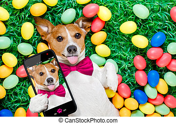 easter bunny dog with eggs selfie - funny jack russell...