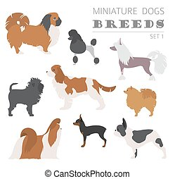 Miniature toy dog breeds collection isolated on white. Flat...