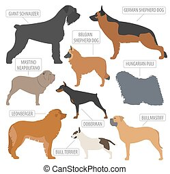 Working (watching) dog breeds collection isolated on white....