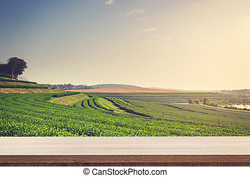 Empty wooden table for product placement or montage and tea field in farm.