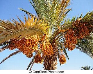 árboles, Palma, sol, paraíso