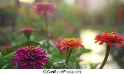 Beautiful colorful flowers in the summer garden in...