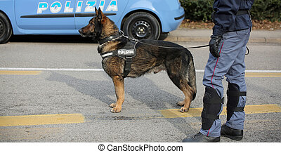 Italian police dog while patrolling the city streets before...