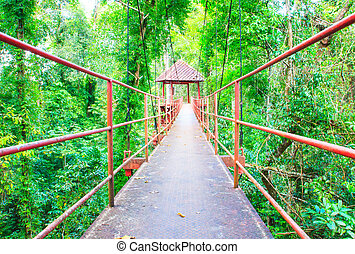Suspension bridge walkway with tree in the forest public park