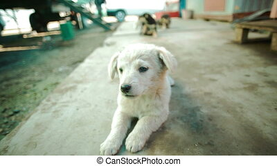 White small arborennly unbroken dog puppie - a group of...