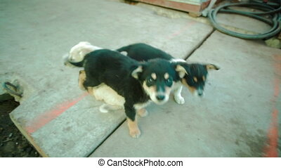 Group of small arborennly unbroken dogs puppies - a group of...