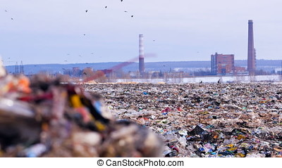 Landfill site with piles of garbage, flock of scavenging...