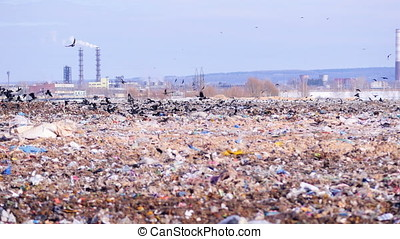 A flock of birds takes off a city dump, landill. Industrial...