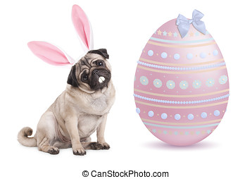 funny cute pug puppy dog with bunny ears diadem sitting next...