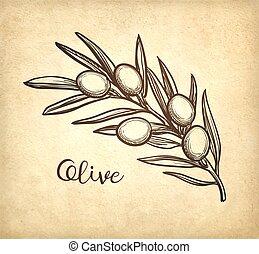 זית, ענף, וקטור, דוגמה
