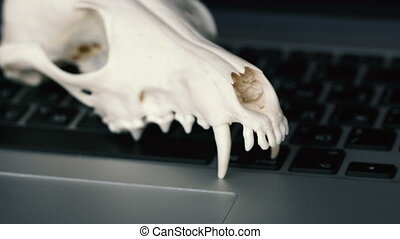 Fox skull without the lower jaw on the laptop keyboard. Concept of the dangers of IT Tehology and Artificial Intelligence