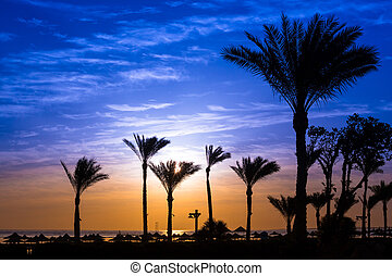 Sunrise at the beach with silhouette of palm trees