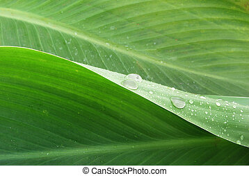 morning dew - leaves with water