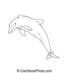 Aquatic Animals Dolphin Drawing Illustration