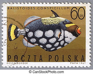 Spotted triggerfish - POLAND - CIRCA 1967: A stamp printed...