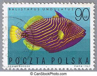 Undulate triggerfish - POLAND - CIRCA 1967: A stamp printed...