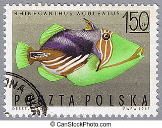 Striped triggerfish - POLAND - CIRCA 1967: A stamp printed...