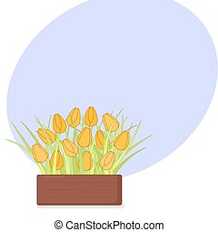 Fresh yellow tulips in wooden box with copyspace on white background