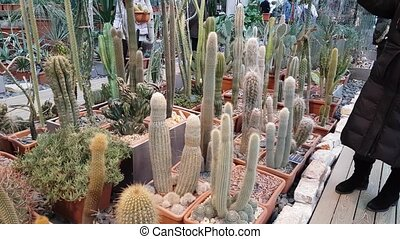 People attend an exhibition of desert plants in the...