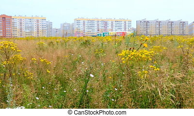 first houses of a large city among meadows and nature - city...