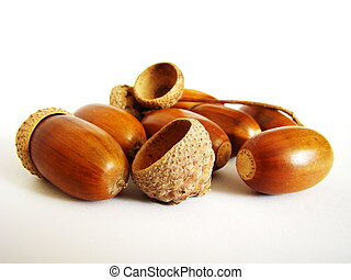 acorns - forest acorns lay on a white background