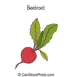 Beetroot with green leaves - Beetroot vegetable with green...
