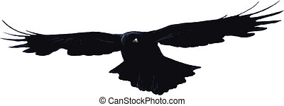 Bird flying high - Vector bird flying high, isolated on...
