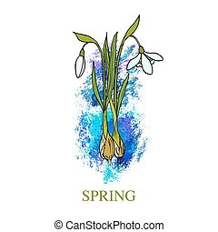 Spring greeting card with snowdrop. Vector illustration