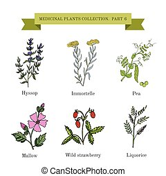 Vintage collection of medical herbs - Vintage collection of...