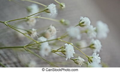 small white flowers on canvas.