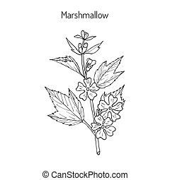 Marshmallow medicinal herb - Althaea officinalis, or common...