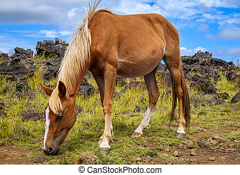 Horse in easter island field, pacific ocean, Chile