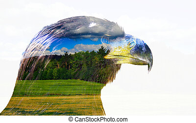 Double exposure eagle with cloud background. Nature abstract...