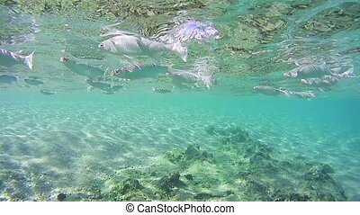 Tropical Fish on Coral Reefs Underwater in the Red Sea,...