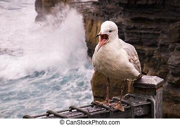 Sea gull bird - Sea gull at ocean with breakers in...
