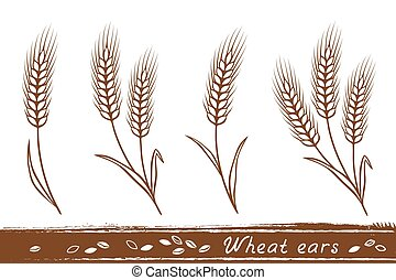 wheat ears set - isolated wheat ears set with grain icons