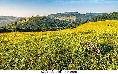 wild flowers on rural hillside