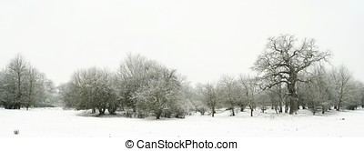 Snow landscape in a park in Magdeburg in winter