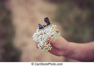 butterfly in blossoming flower