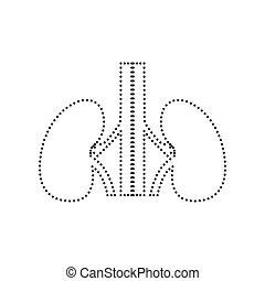 Human kiddneys sign. Vector. Black dotted icon on white background. Isolated.