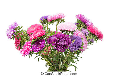 Beautiful flower aster isolated on white background