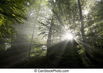 sun rays - An image of beautiful sun rays and green leafs
